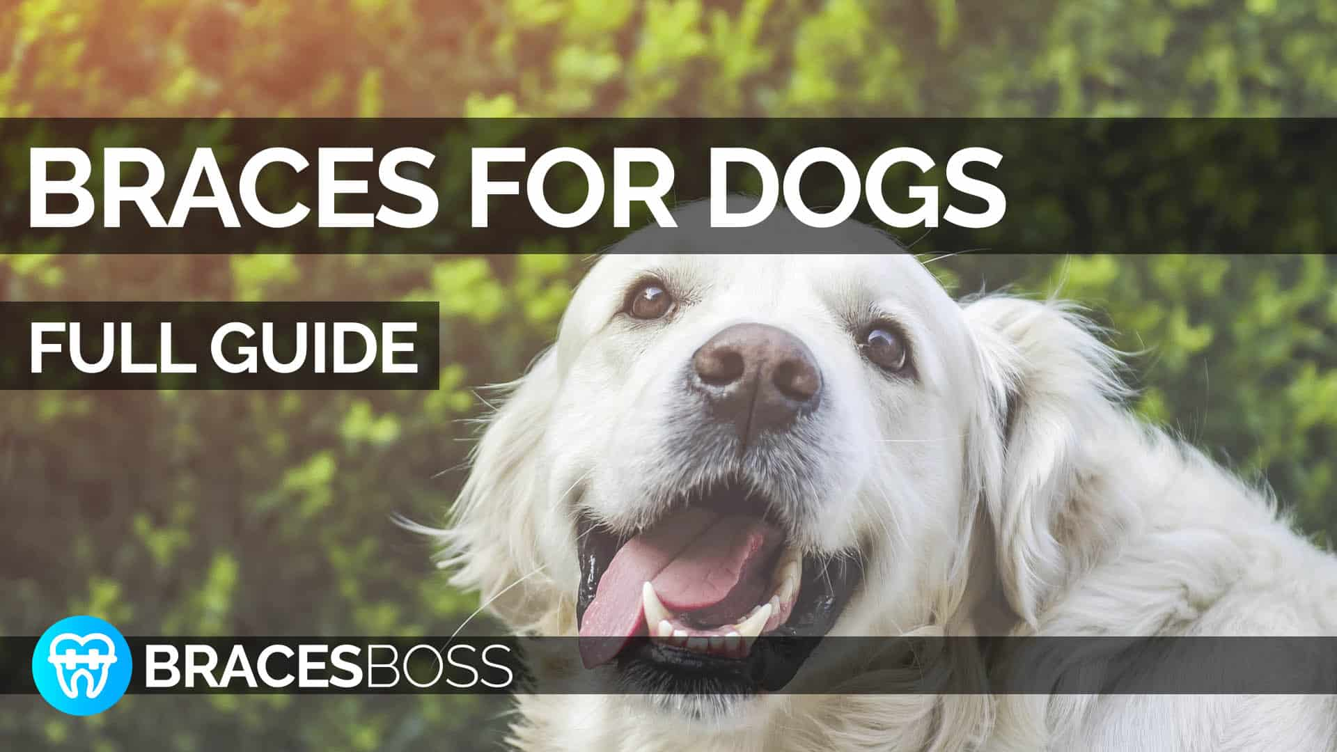 braces for dogs