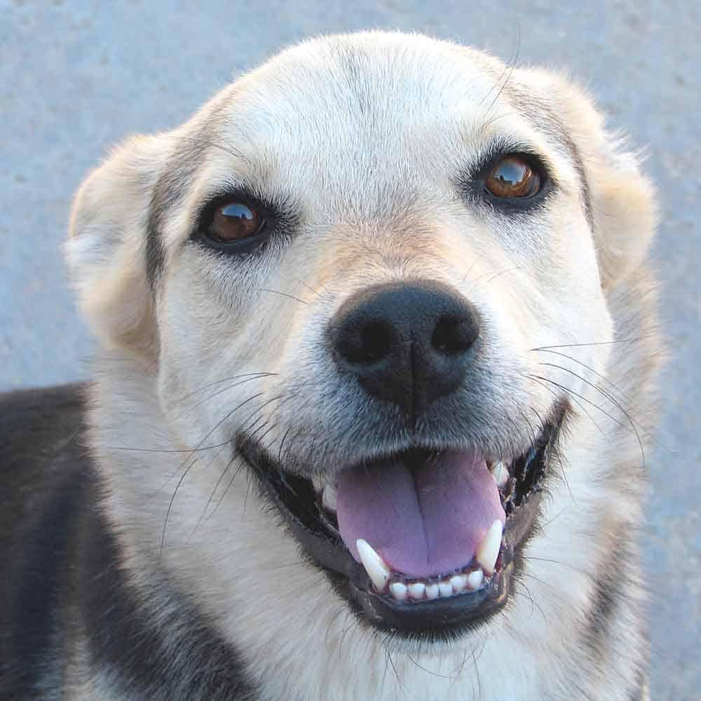 dental braces for dogs
